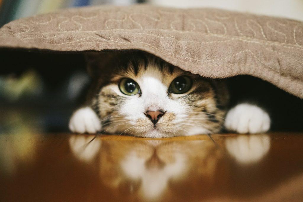 布団をかぶった猫